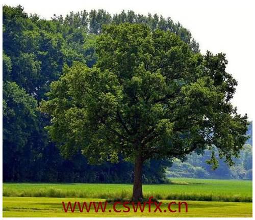 描写树树的优美句子
