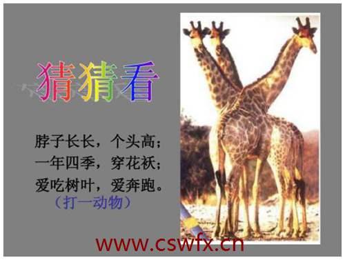 描写长颈鹿的句子