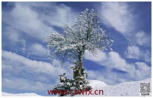 描写家乡冬天风景的句子