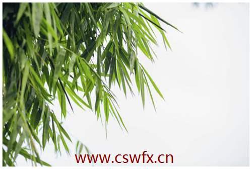 描写竹优美的句子