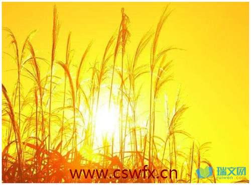 描写秋日阳光的句子