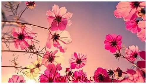 描写花与生活的优美句子 句子大全 第1张
