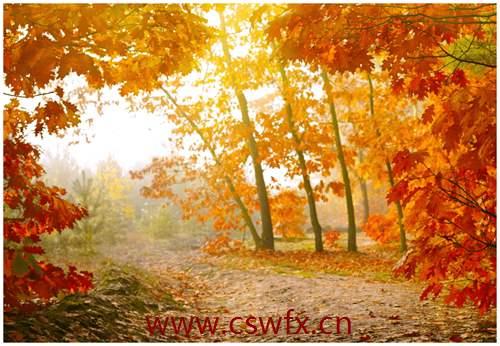 描写秋天的美景句子