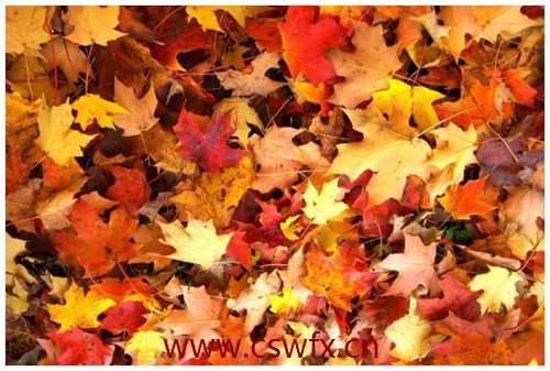 描写秋花优美的句子