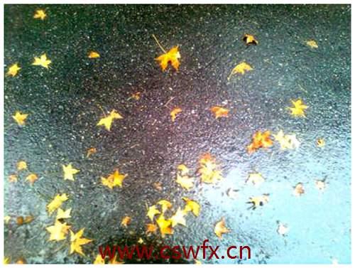 描写一场秋雨一场寒的句子