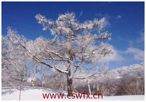 描写冬天景色句子