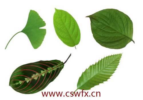 描写绿叶叶子的句子