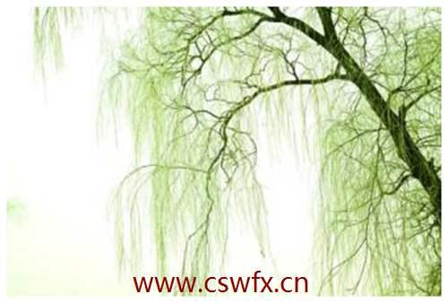 描写晚上柳树的句子