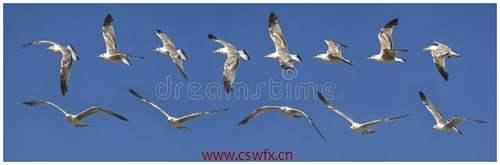 描写海鸥飞行的句子