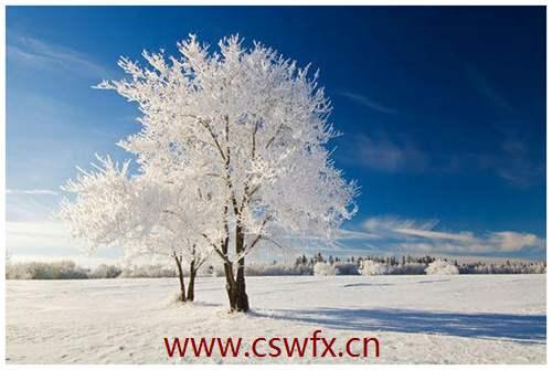 描写冬天大树的句子