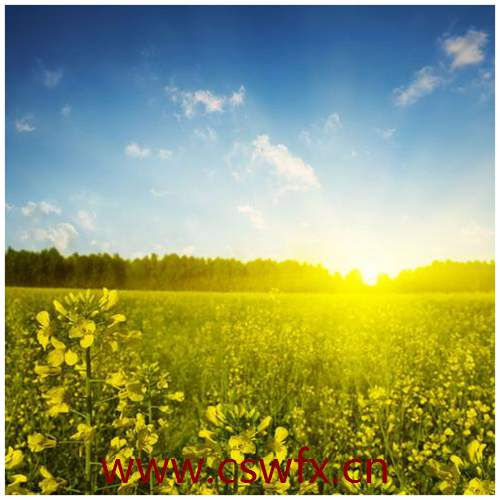 描写大自然美景的唯美句子