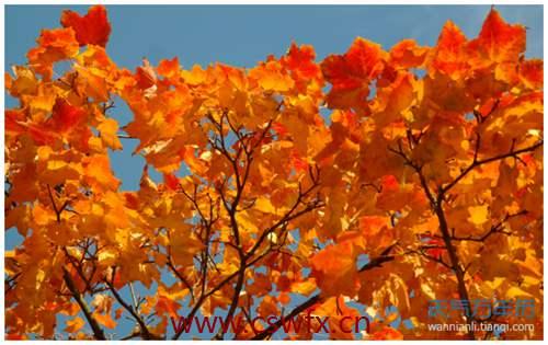 描写秋天风景美丽的句子