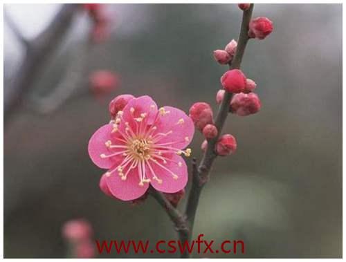 描写春天的花儿的句子