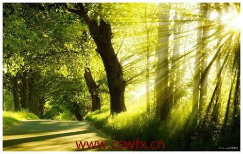 描写清晨的阳光唯美句子