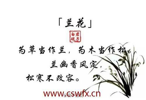 描写兰花的好句子