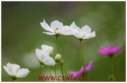 描写赏花的心情句子