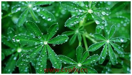 描写绿色植物句子