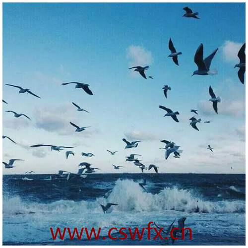 描写海鸥和海的句子