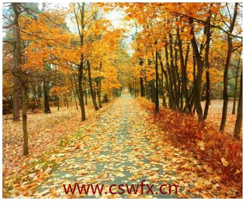 描写秋季景物的句子