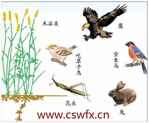 描写大自然动物的句子