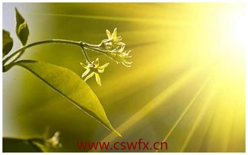 描写春天的阳光的句子