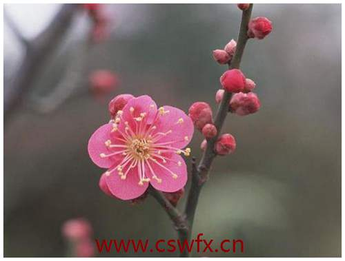 描写春天和花的优美句子