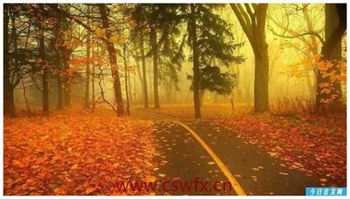 描写秋天的凄凉句子