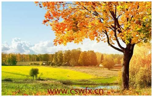 描写秋天秋景的句子