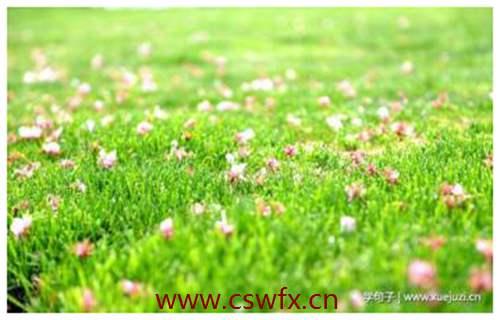 描写花草地的短句子
