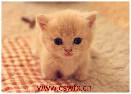 描写猫咪唯美的句子