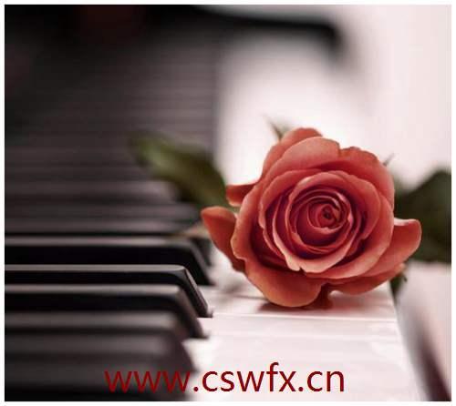 描写玫瑰花优美的句子