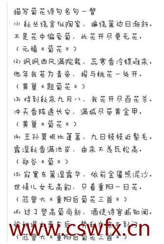 描写菊花夏天的句子