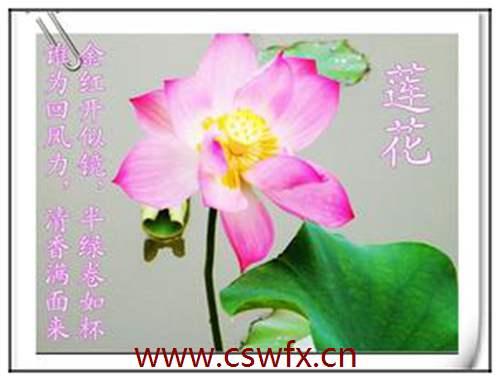 描写赞美花朵的句子