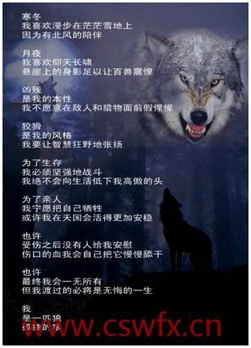 描写狼的短句子