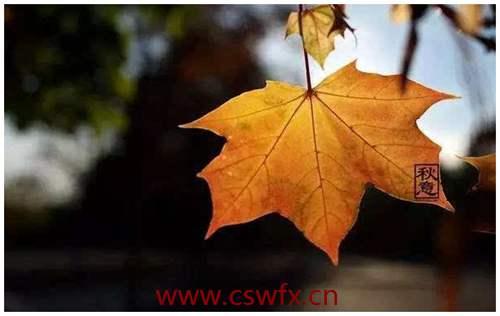 描写秋风秋雨落叶的句子