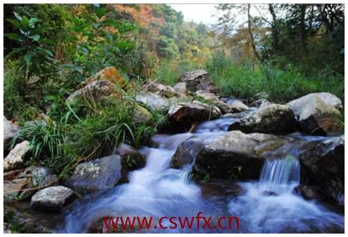 描写小溪溪水的优美句子