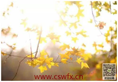 描写秋景伤感的句子