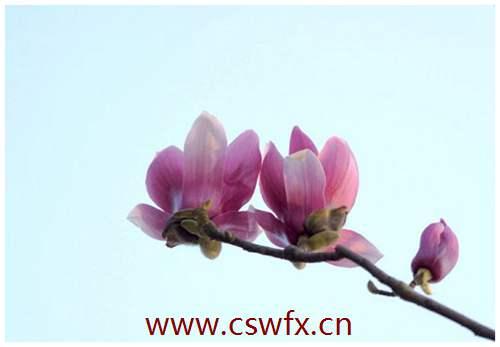 描写花卉的唯美句子