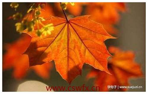 描写秋季的枫叶的句子 句子大全 第1张