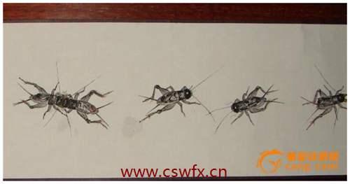 描写蟋蟀的唯美句子