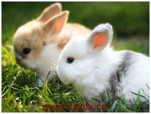 描写兔子的唯美句子 句子大全 第1张
