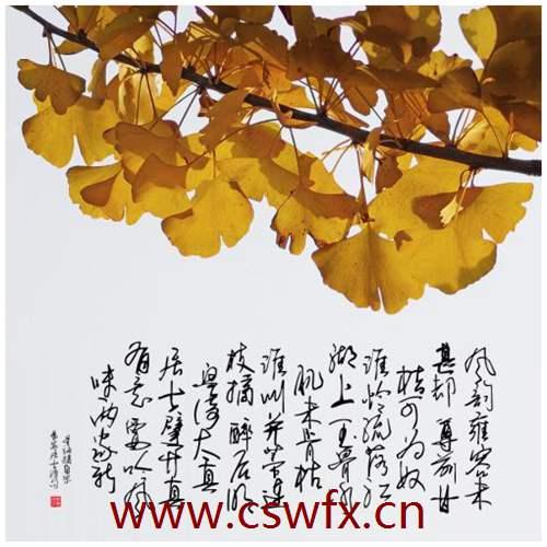 描写银杏树的的唯美句子
