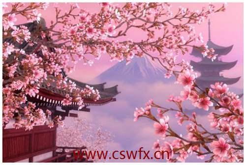 描写樱花坚强的句子