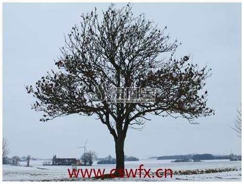 描写冬天树木的优美句子