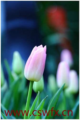 描写春花花花的优美句子