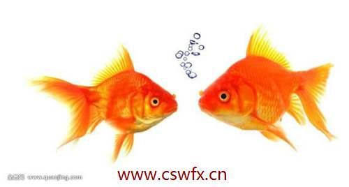 描写金鱼句子