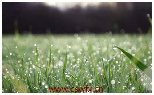 描写春天春雨的句子