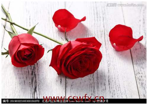 描写红玫瑰的爱情句子 句子大全 第2张