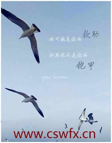 描写海鸥的优美句子 句子大全 第2张
