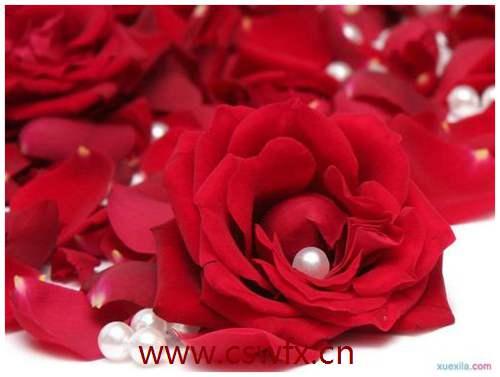 描写玫瑰花的的简单句子 句子大全 第2张
